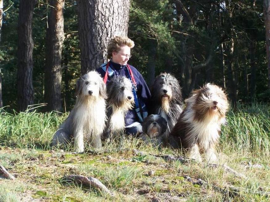 giardien hund ansteckung mensch